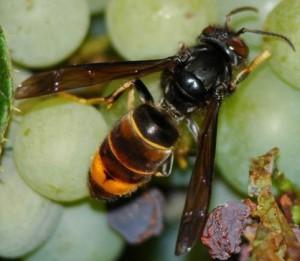 Bienensterben1